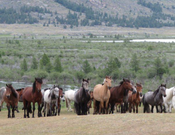 horsetrek_8